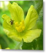 Fly On Flower Metal Print