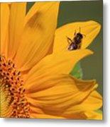 Fly On Sunflower Metal Print