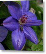 Fly On The Clematis Metal Print