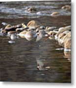 Flycatcher Hunting On The Buffalo River Metal Print
