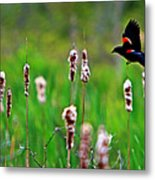 Flying Amongst Cattails Metal Print