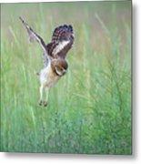Flying Baby Burrowing Owl Metal Print