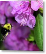 Flying Bee Collecting Pollen Metal Print