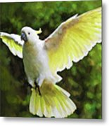 Flying Cockatoo  Metal Print