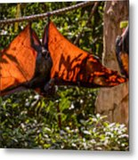 Flying Foxes Metal Print