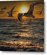 Flying Gulls At Sunset Metal Print