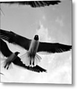 Flying High Metal Print