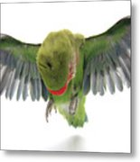 Flying Parrot  Metal Print