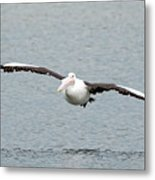 Flying Pelican Metal Print