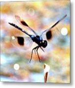 Flying Sparkler Metal Print