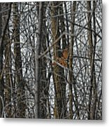 Flying Through The Trees Of The Forest Metal Print