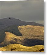 Flying To The Fields Of Gold Metal Print