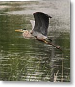 Flying With Style Metal Print