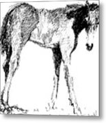 Foal In Black And White Metal Print