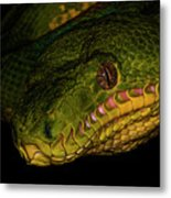 Focus - A Close Look At An Emerald Boa Constrictor Metal Print