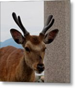 Focus Deer Metal Print