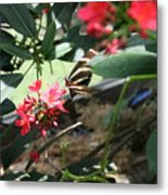 Focus In The Center - Black And White Butterfly Metal Print