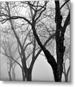 Fog 1 Metal Print by Beverly Hammond