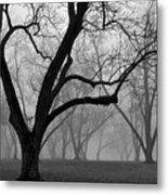 Fog 2 Metal Print by Beverly Hammond