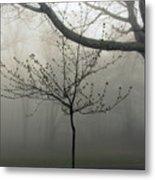 Fog In Shenandoah Metal Print