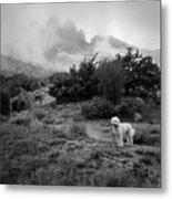 Fog In The Organ Mountains Metal Print