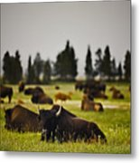 Foggy Herd Metal Print