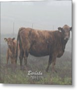 Foggy Mist Cows #0090 Digitally Altered Metal Print