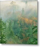 Foggy Morning In Humbolt County California Metal Print
