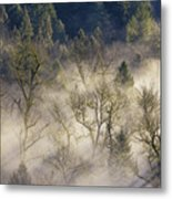 Foggy Morning In Sandy River Valley Metal Print