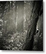 Foggy Morning In The Woods Metal Print