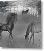 Foggy Morning Pasture Metal Print