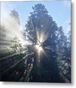 Foggy Redwood Sunrise Metal Print