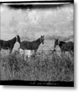 Horse Trio In Morning Fog Metal Print