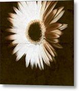 Folded Daisy Metal Print
