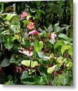 Foliage And Flowers Metal Print