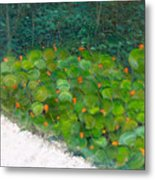 Foliage At Sanibel Metal Print