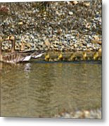 Follow The Leader Metal Print