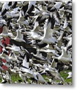 Follow The Leader Pg013 Metal Print