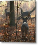 Following The Does Metal Print