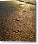 Footprints - Bird Metal Print