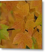 For Every Season There Is A Color Metal Print