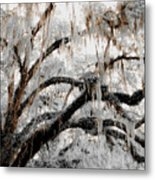For The Grace Of The Beauty Of A Aged Tree Metal Print