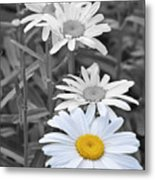 For The Love Of Daisy Metal Print