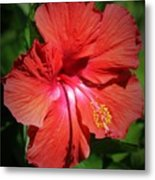 For The Love Of Hibiscus Metal Print