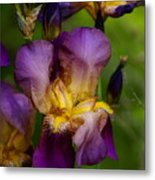 For The Love Of Iris Metal Print