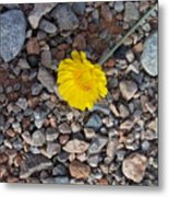 For You My Love Metal Print