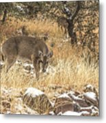 Foraging In The Snow Metal Print