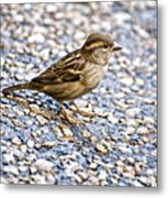 Foraging Metal Print