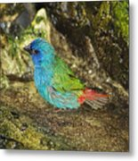 Forbes Parrot Finch Metal Print