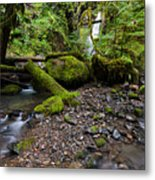 Forest Adventures Metal Print
